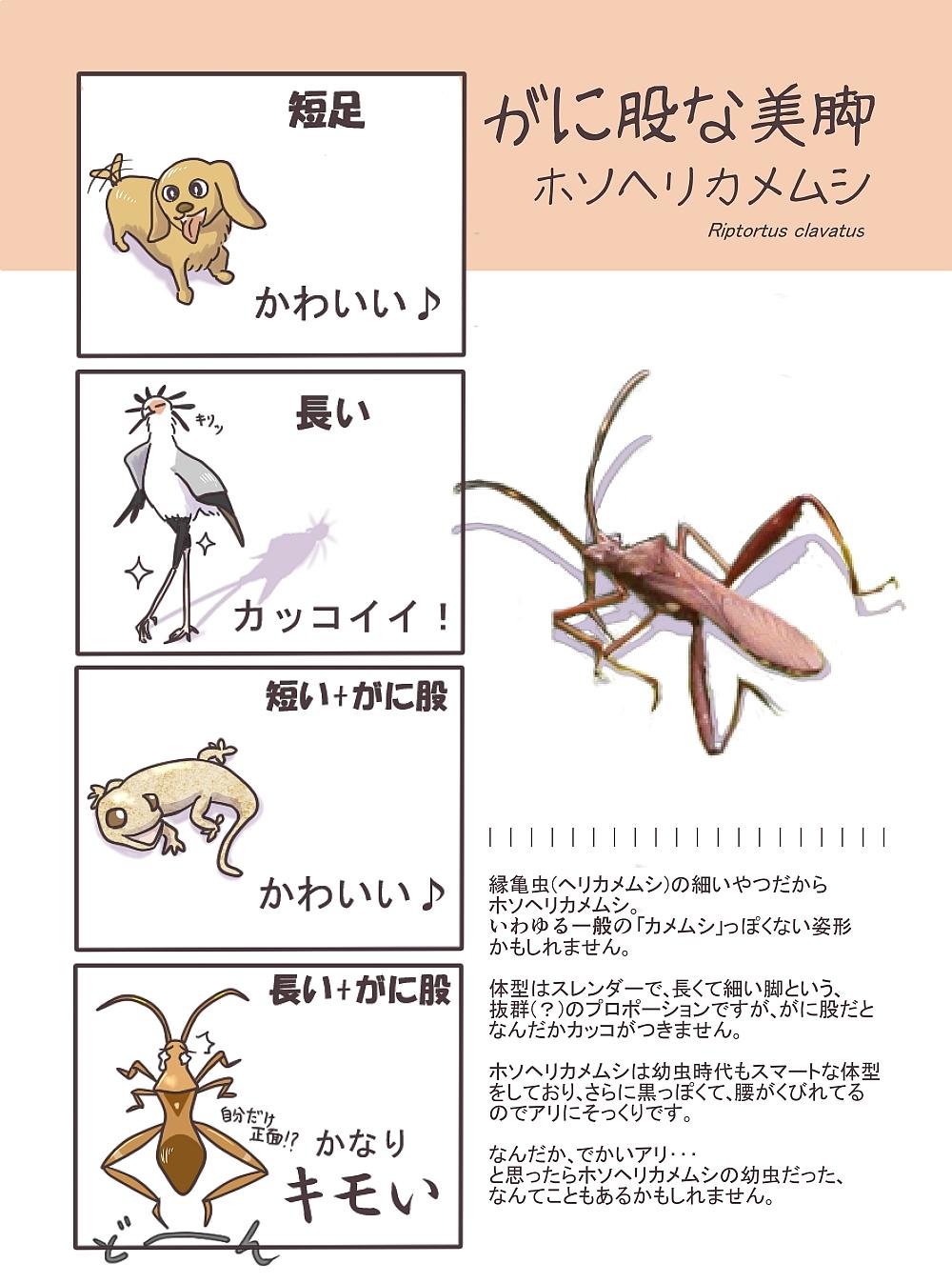 ホソヘリカメムシ