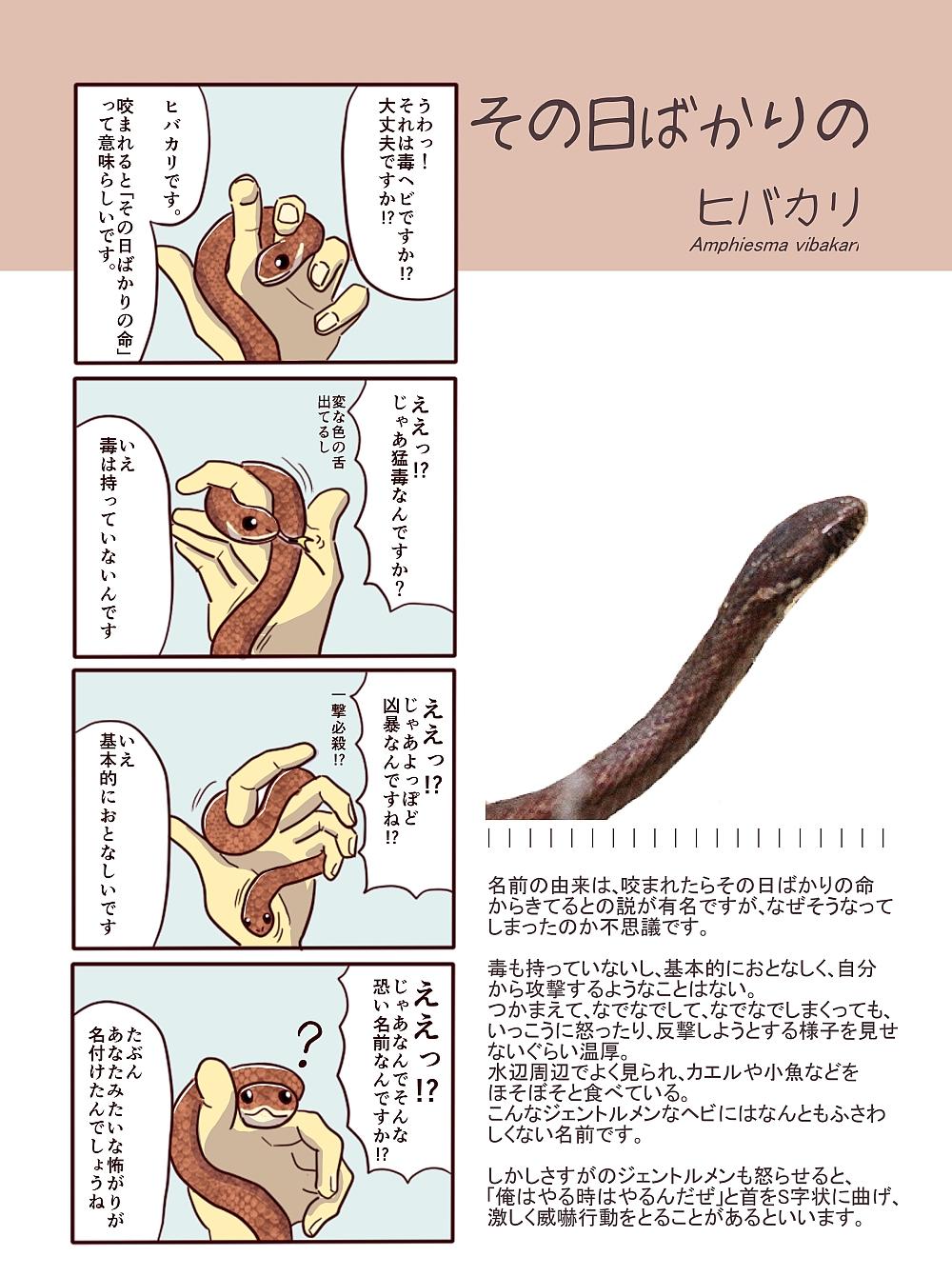 ヒバカリの画像 p1_28