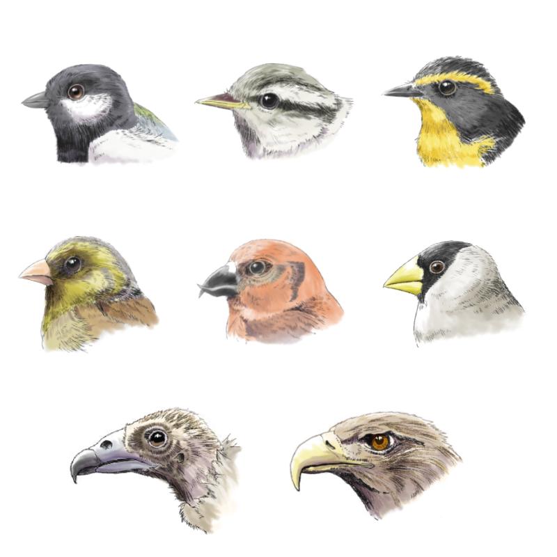 鳥のアタマ集