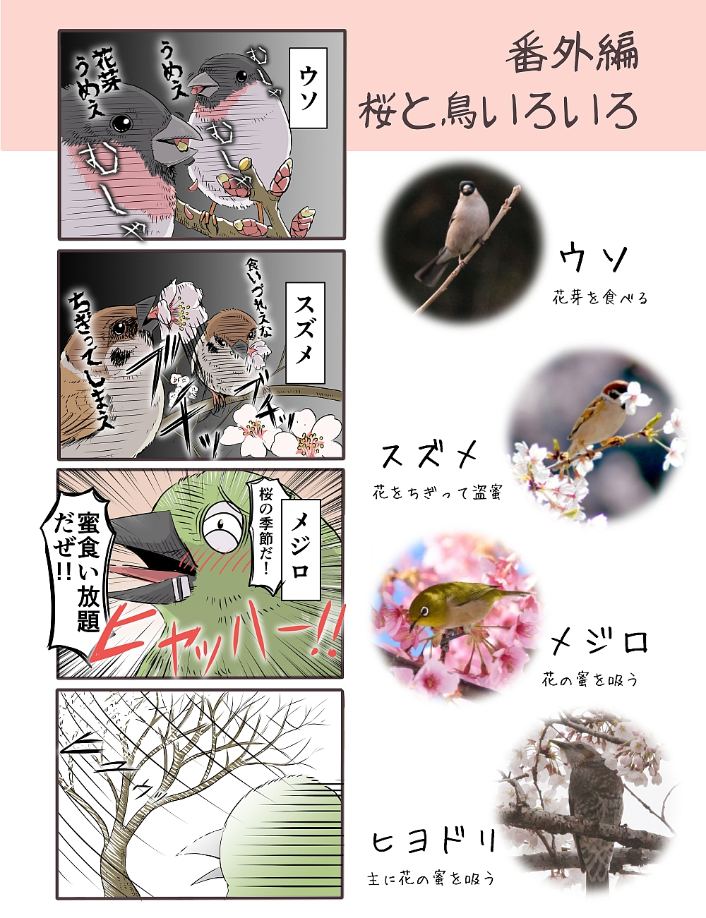 桜にくる鳥